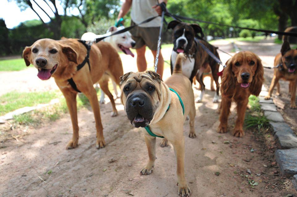 Perros de paseo