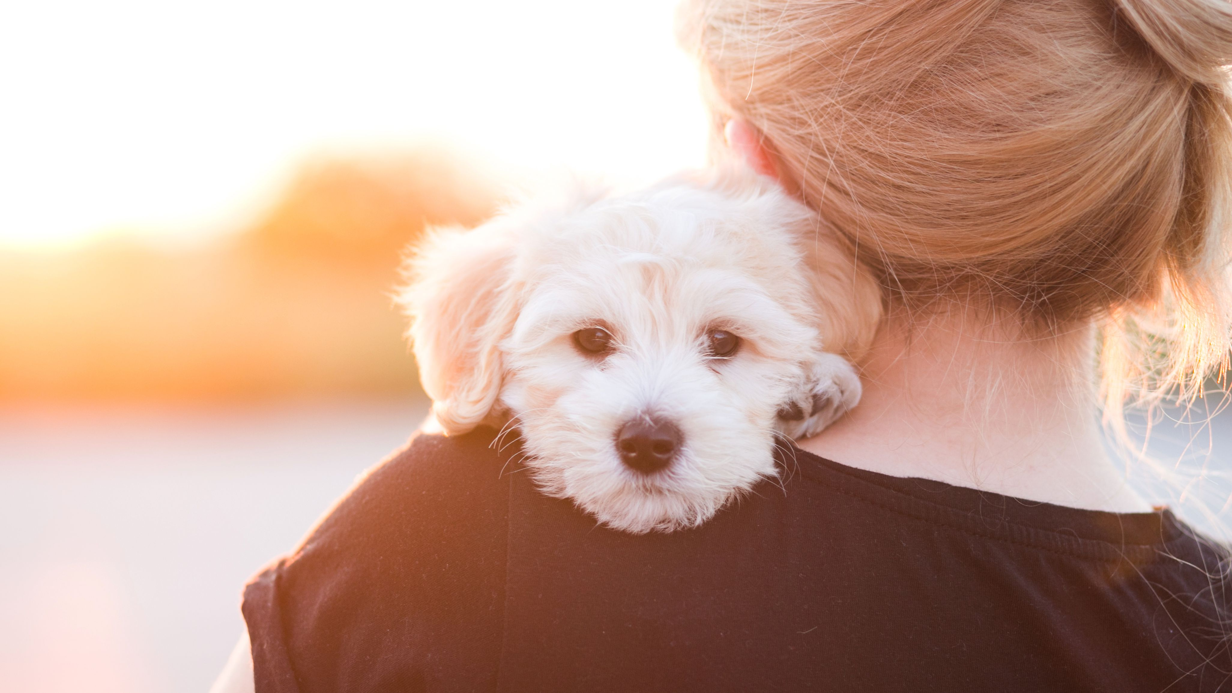 Dogs and Phobias: Signs of Fear in Dogs