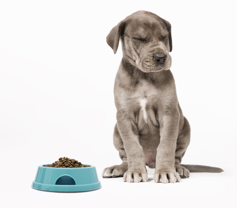 Puppy ignoring food