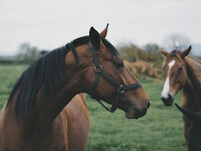 What Is a Mechanical Hackamore and How Does It Work?