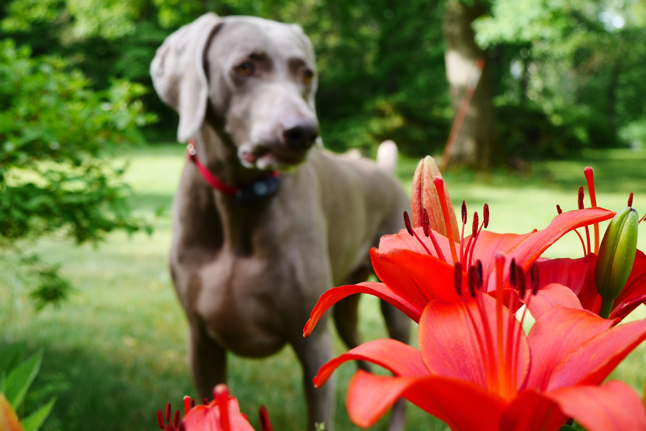 Poisonous Plants for Puppies First Aid Treatment