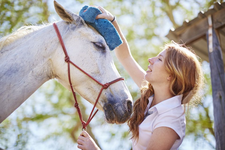 Young woman grooming horse with sponge