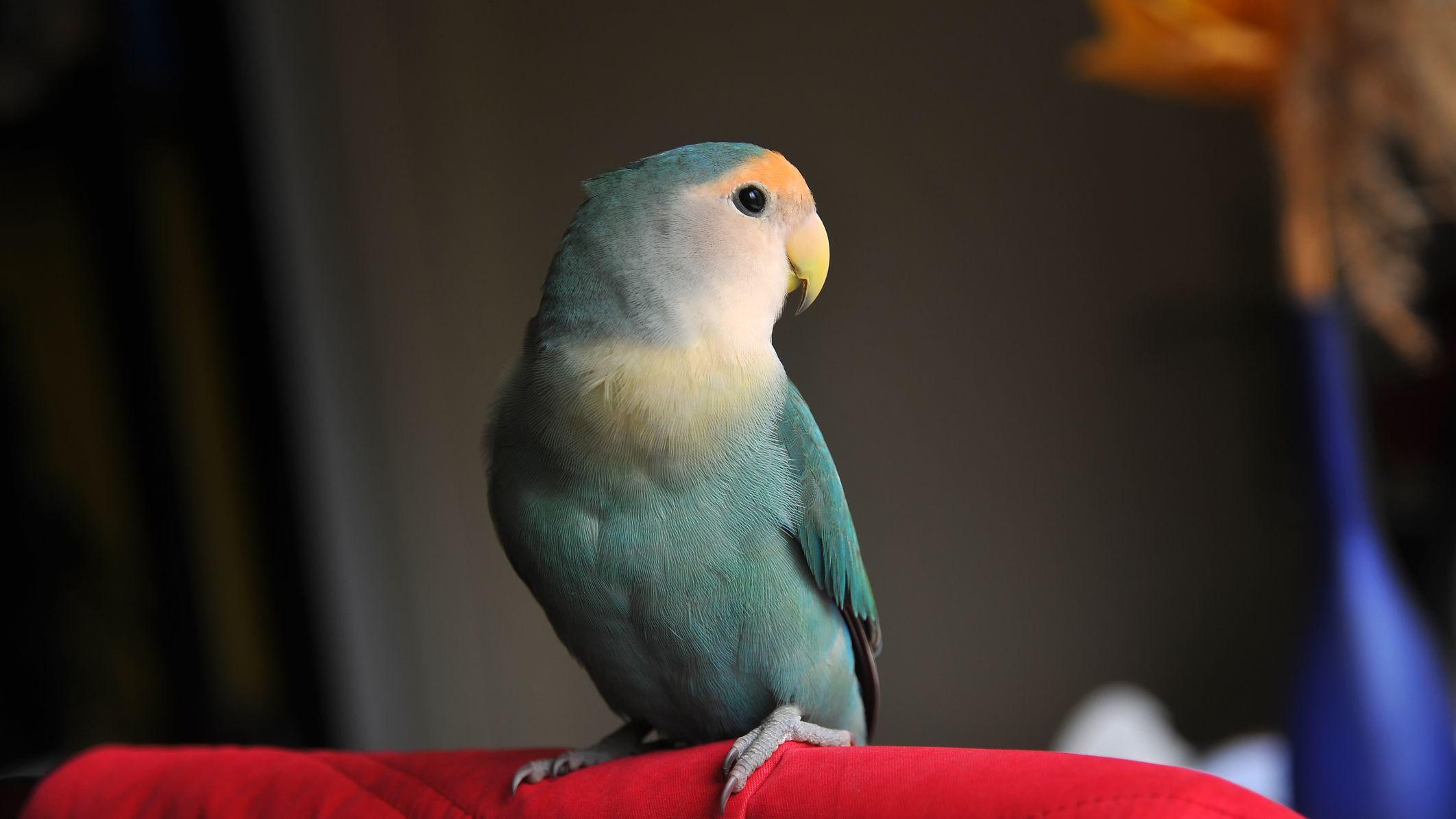 8 Top Small Pet Birds