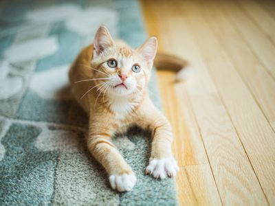 Why You Have a Stressed Cat and How to Fix It