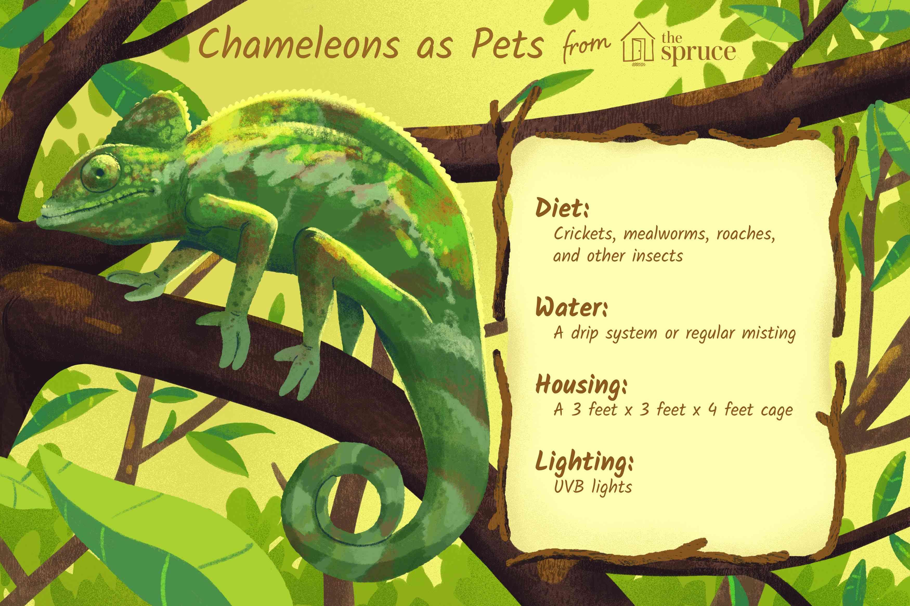 chameleons as pets illustration