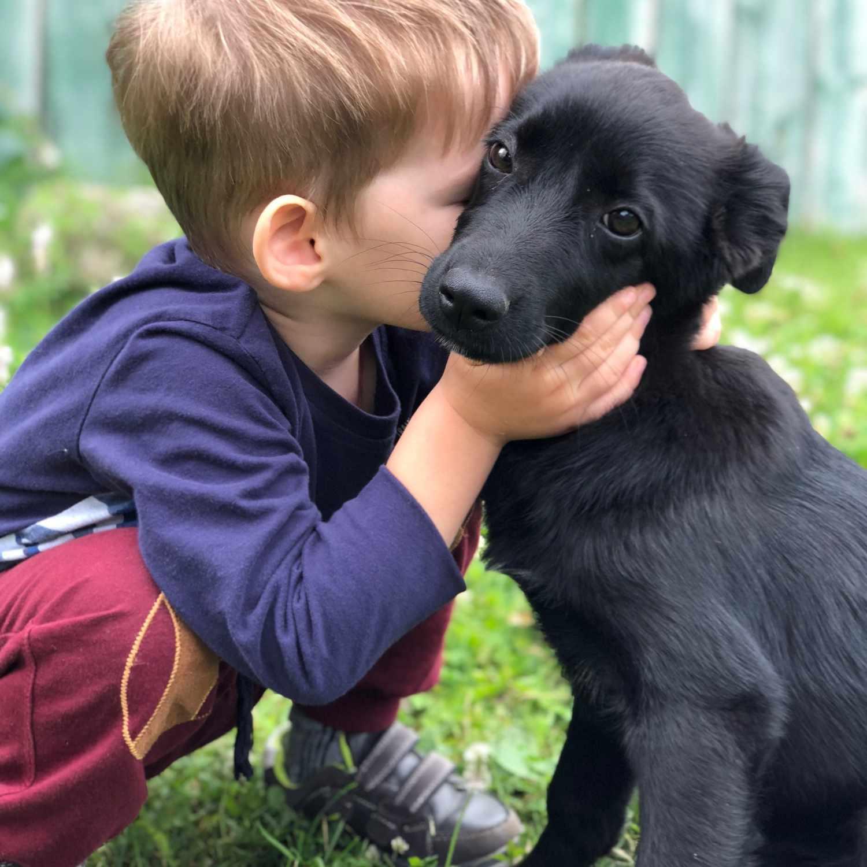 Niño besando cachorro