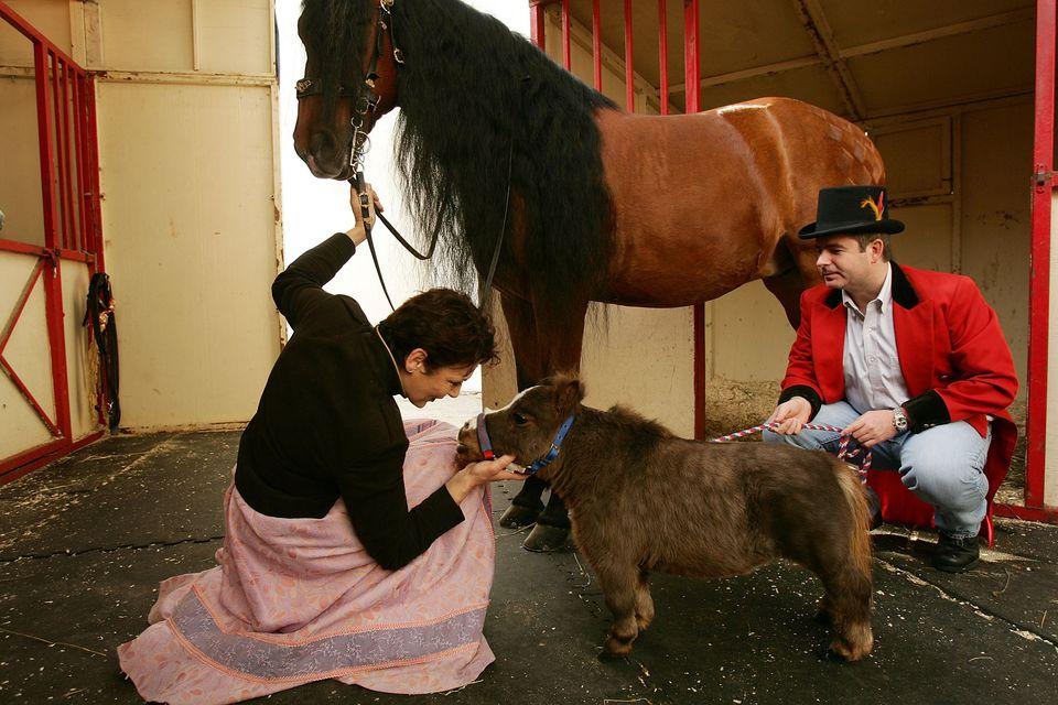 World's Smallest Horse Visits New York City