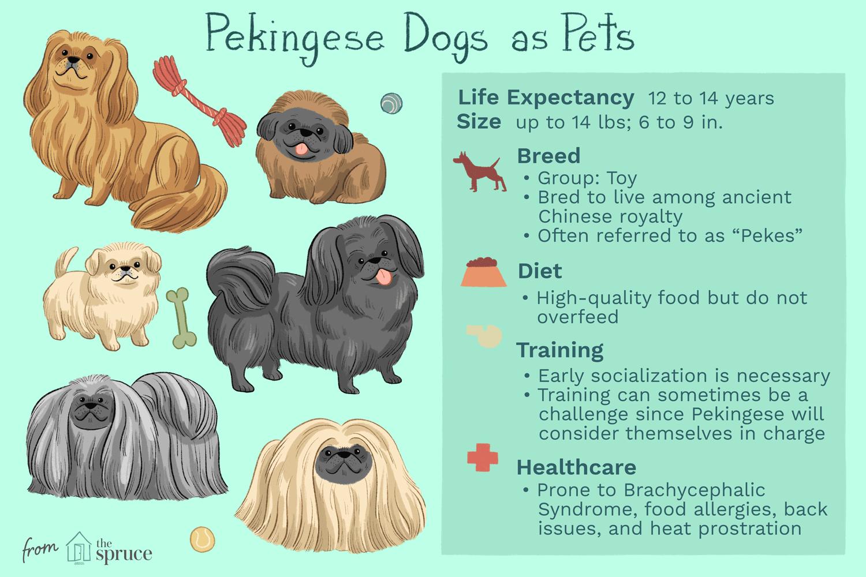 pekingese dogs as pets