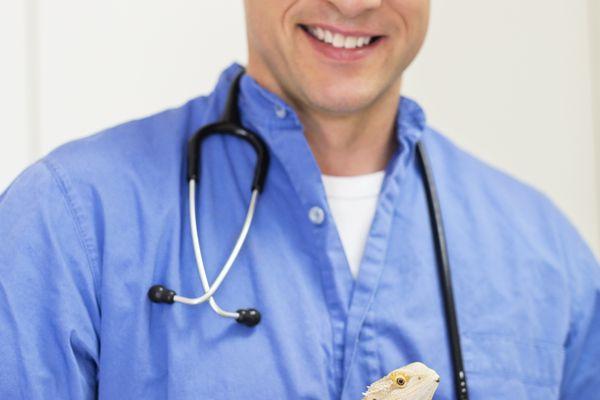 Veterinarian holding a bearded dragon