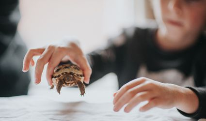 Child with small tortoise