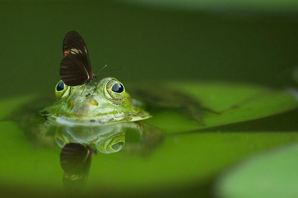 frog with butterfly on its nose