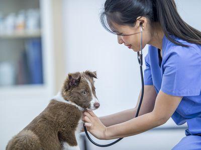 Cardiac Arrest in Dogs