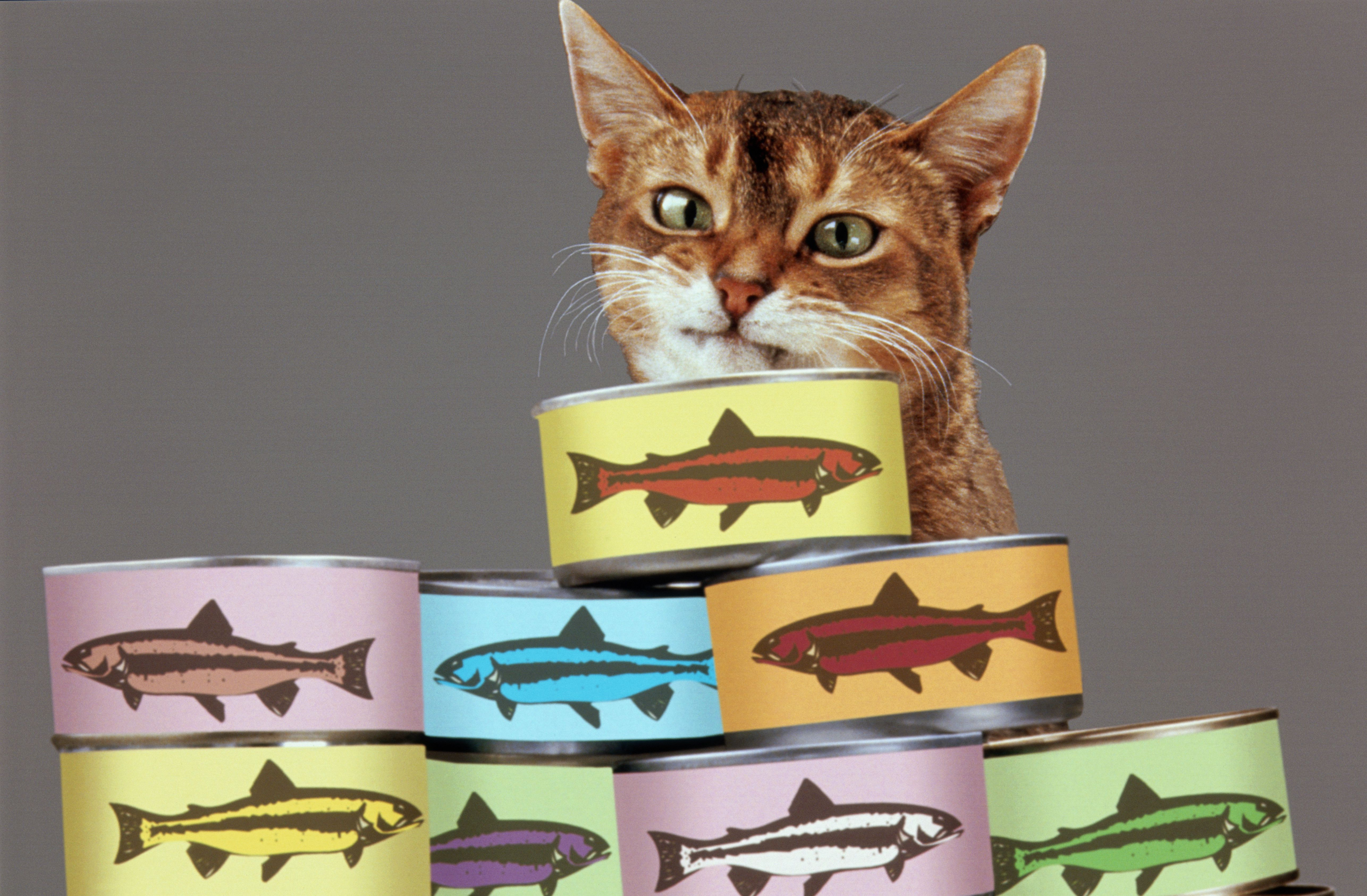 Abyssinian cat behind stacked food cans