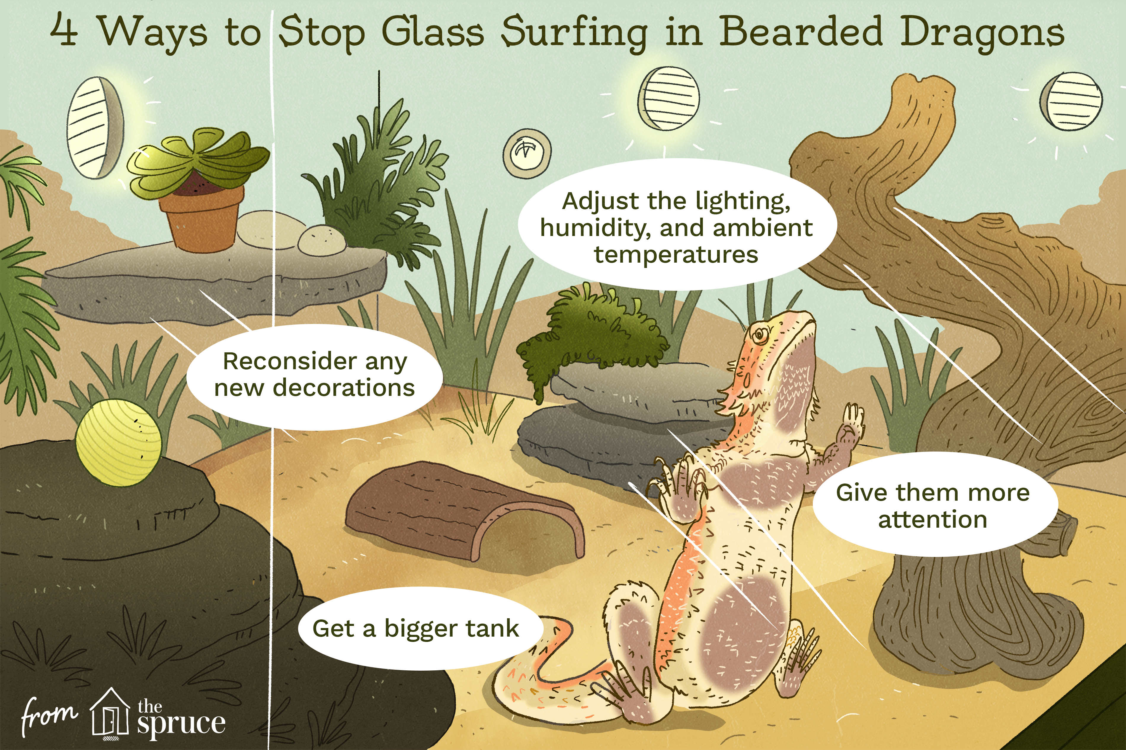 how to stop glass surfing in bearded dragons illustration
