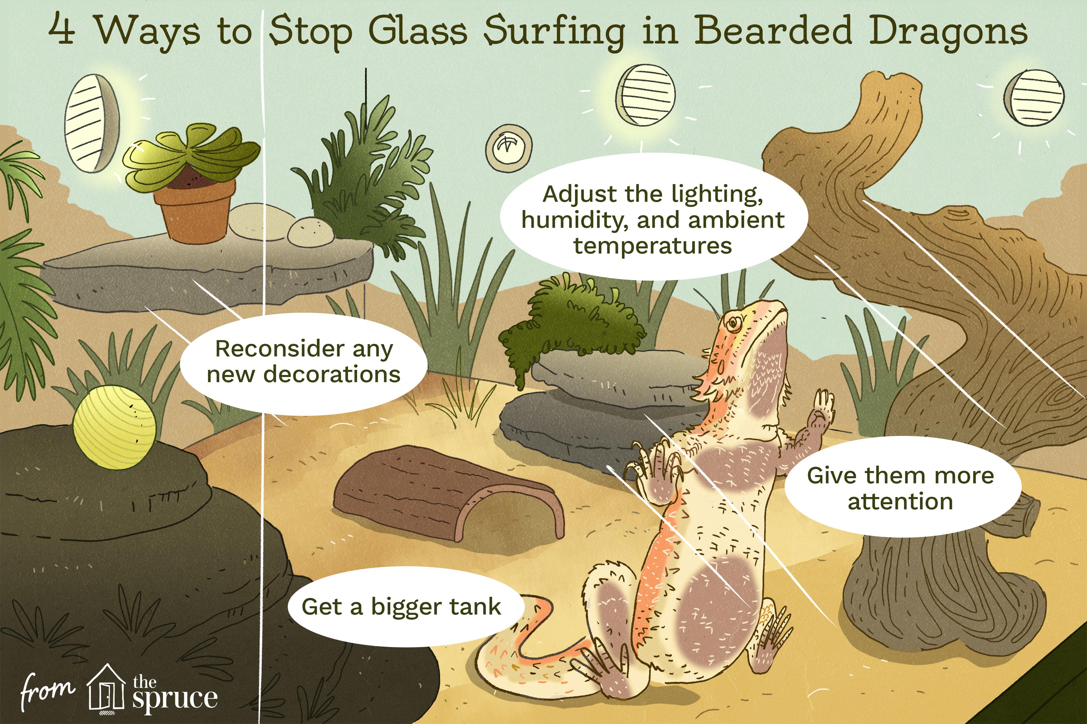 Cómo detener el surf de cristal en la ilustración de dragones barbudos