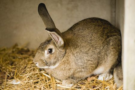 How To Clean A Rabbit Cage, How Often Should I Change My Rabbits Bedding