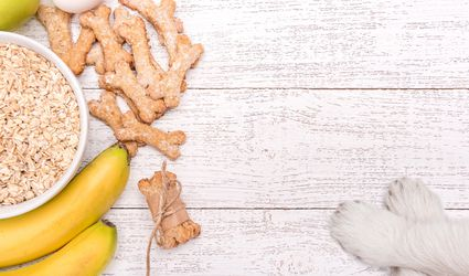 Oats, bananas, and oat dog treats on table next to white paws.