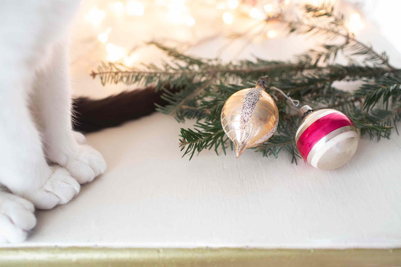 Gato cerca de adornos navideños