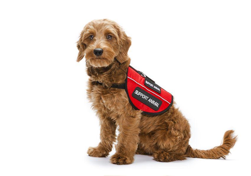 service dog training