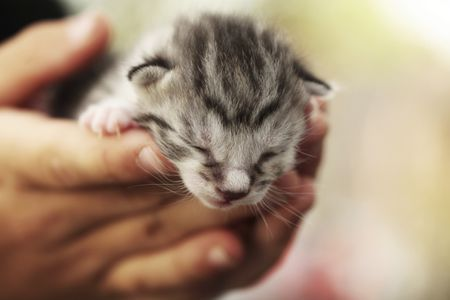 How to Treat Fading Kitten Syndrome