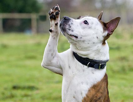 how to train a dog to wave