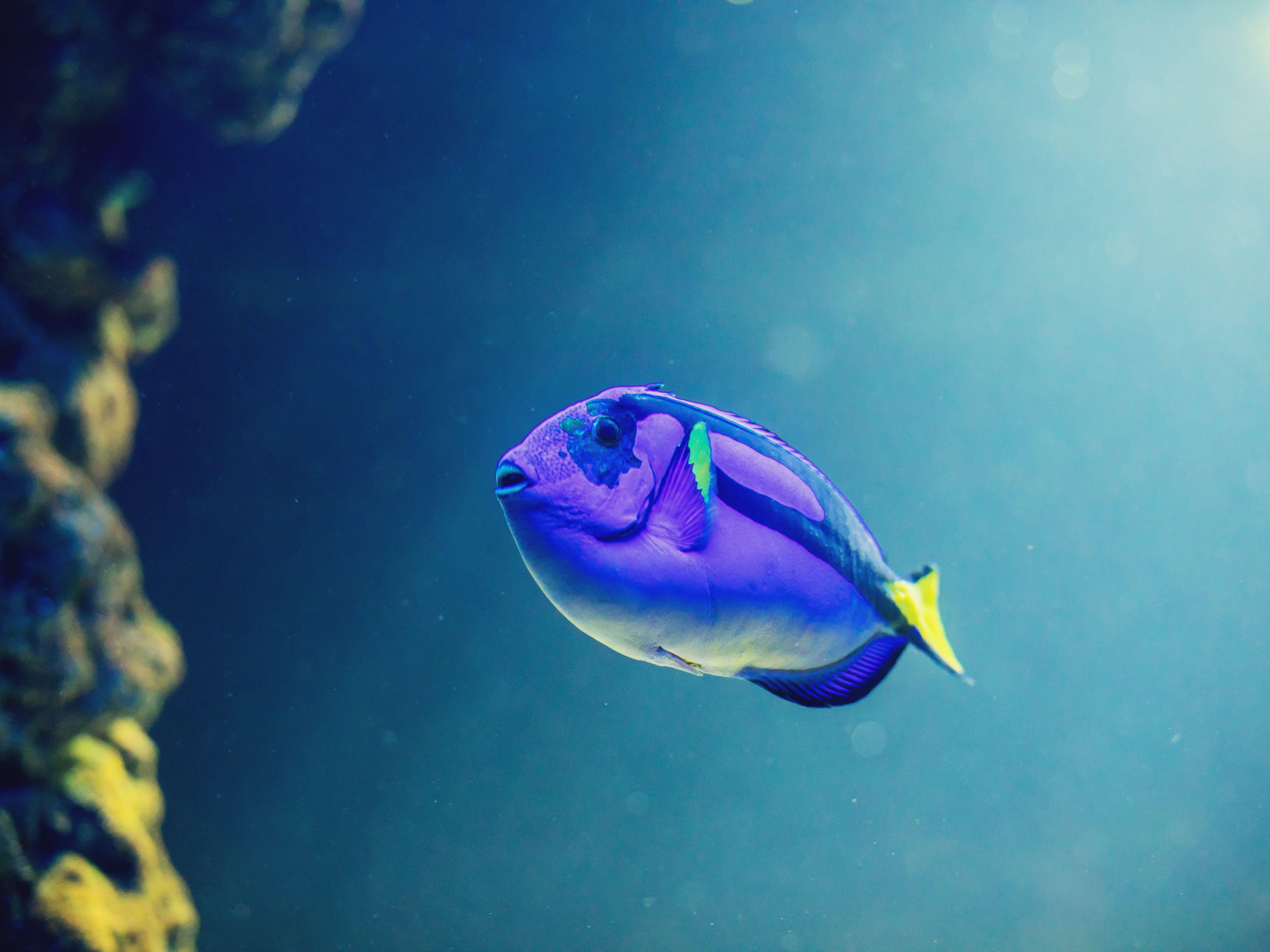 Using A Saltwater Aquarium Fish Diagnostic Tool