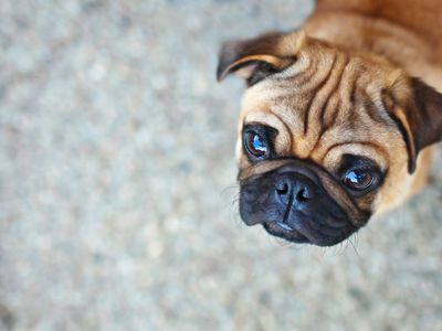 How to Treat Rat Poisoning in Dogs
