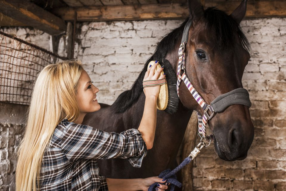 Woman brushing a horse.