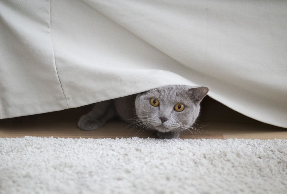 Cat Hiding in Home
