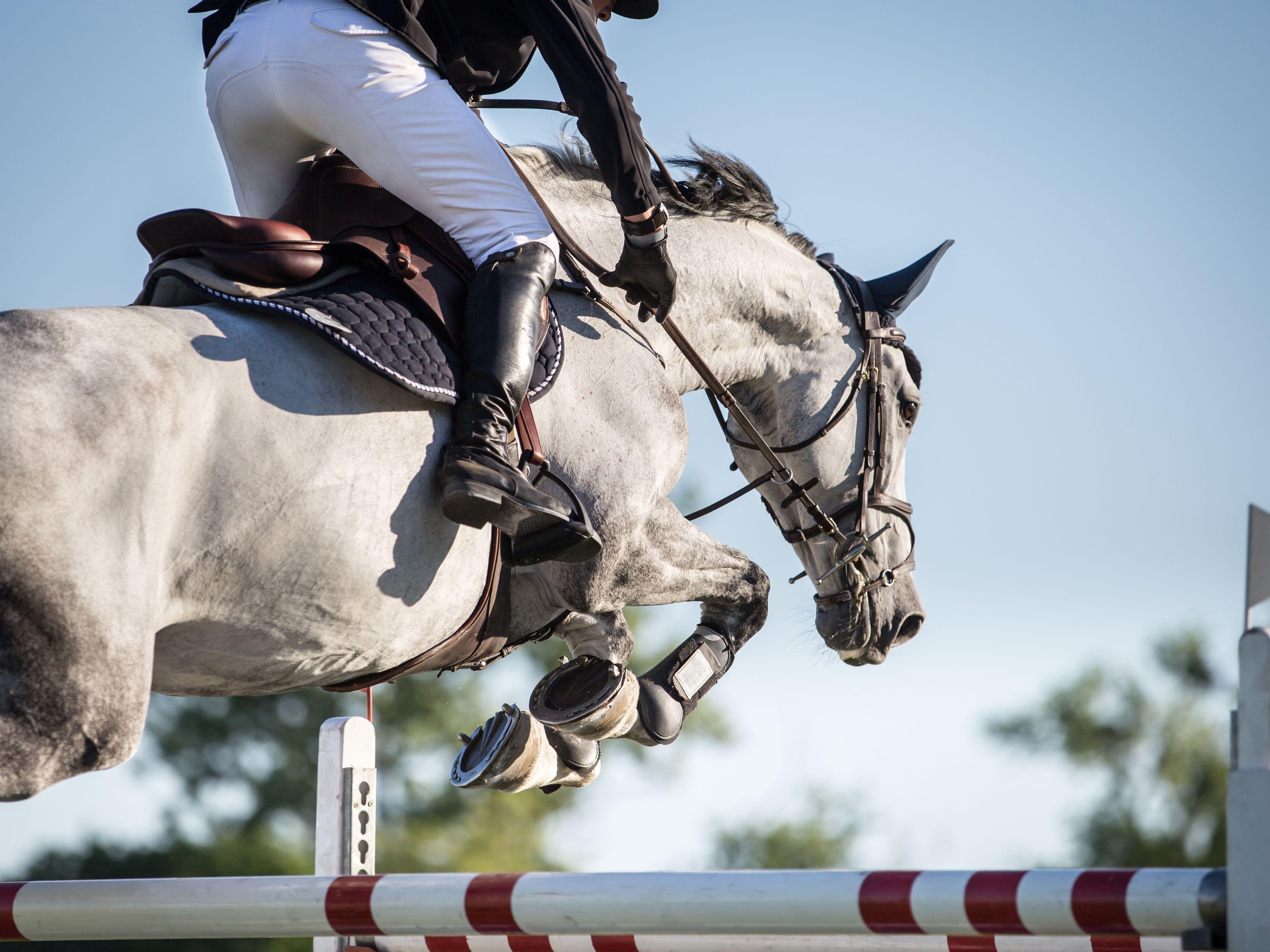 7 Popular Horse Show Jumps
