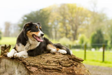36++ Irish female names for dogs information