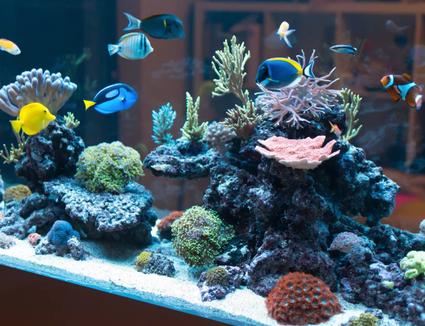 large aquarium