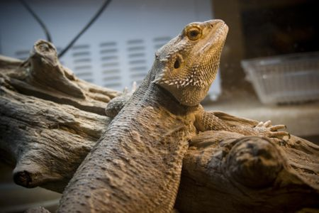 Providing Heat and Light for Pet Reptiles