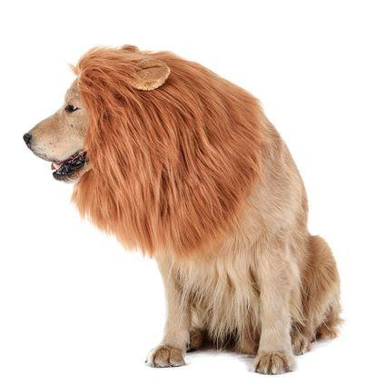 lion-dog-costume
