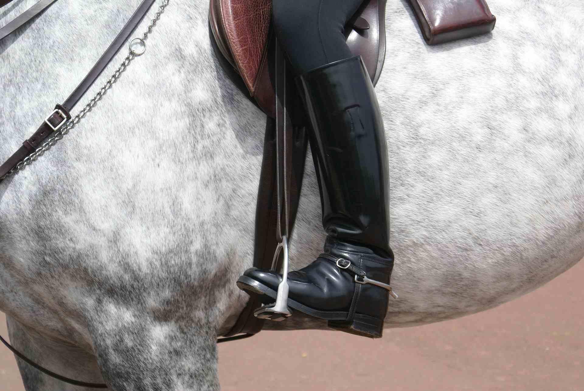 Close up of Rider's Leg With English Tack