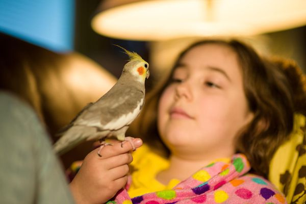 Girl holding cockatiel