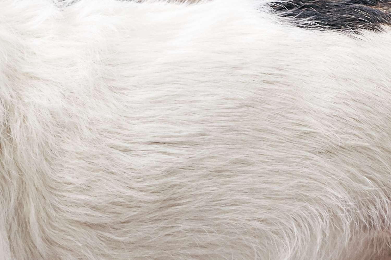 Closeup of a mixed breed dog's fur