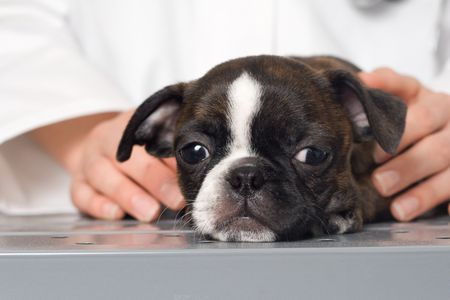 How to Treat Bloody Diarrhea in Dogs
