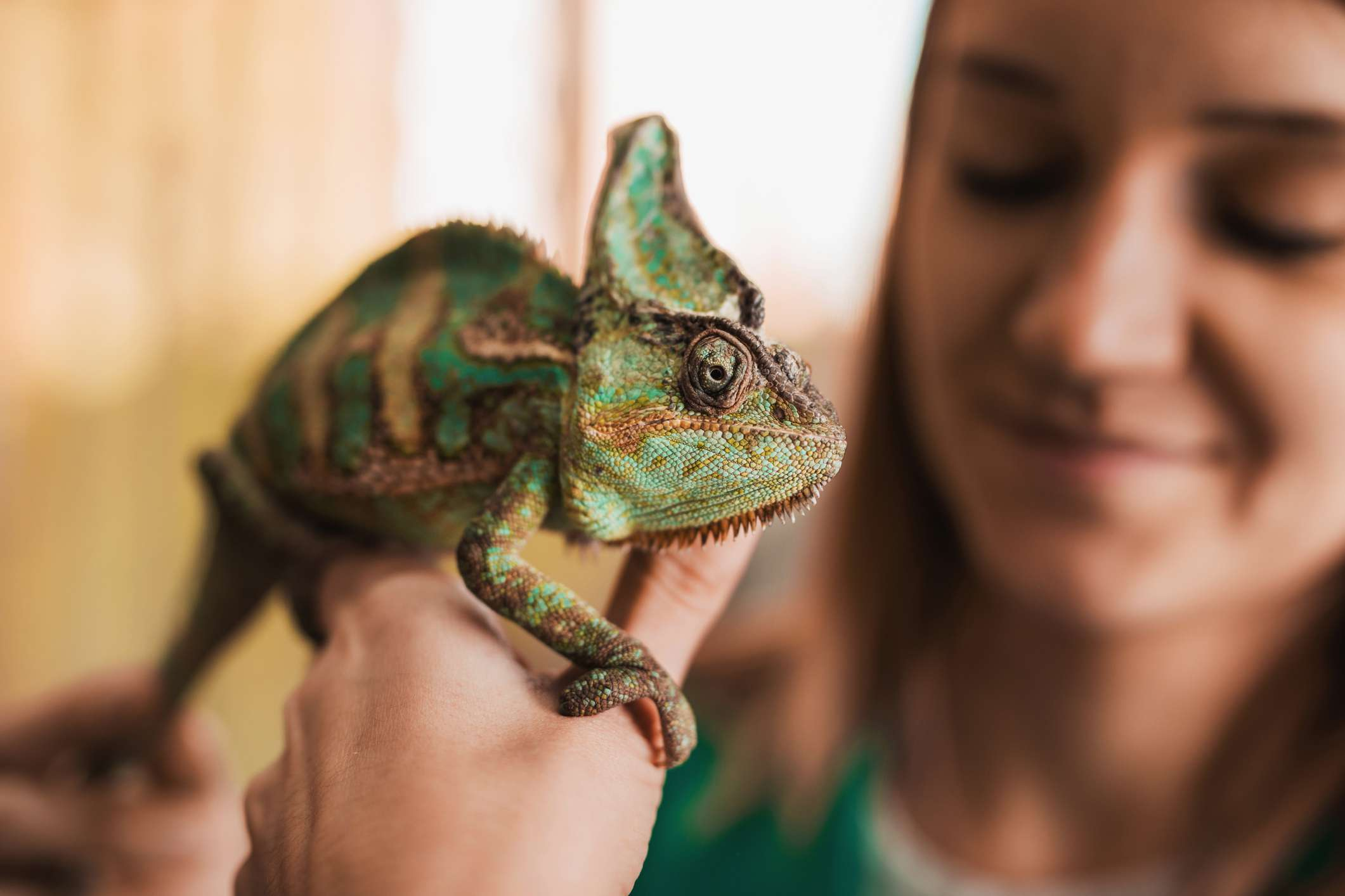 Close up of a chameleon on a woman's hand