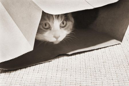 How to Train Your Scared Cat to Be Confidient