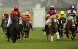Racing Shetland Ponies