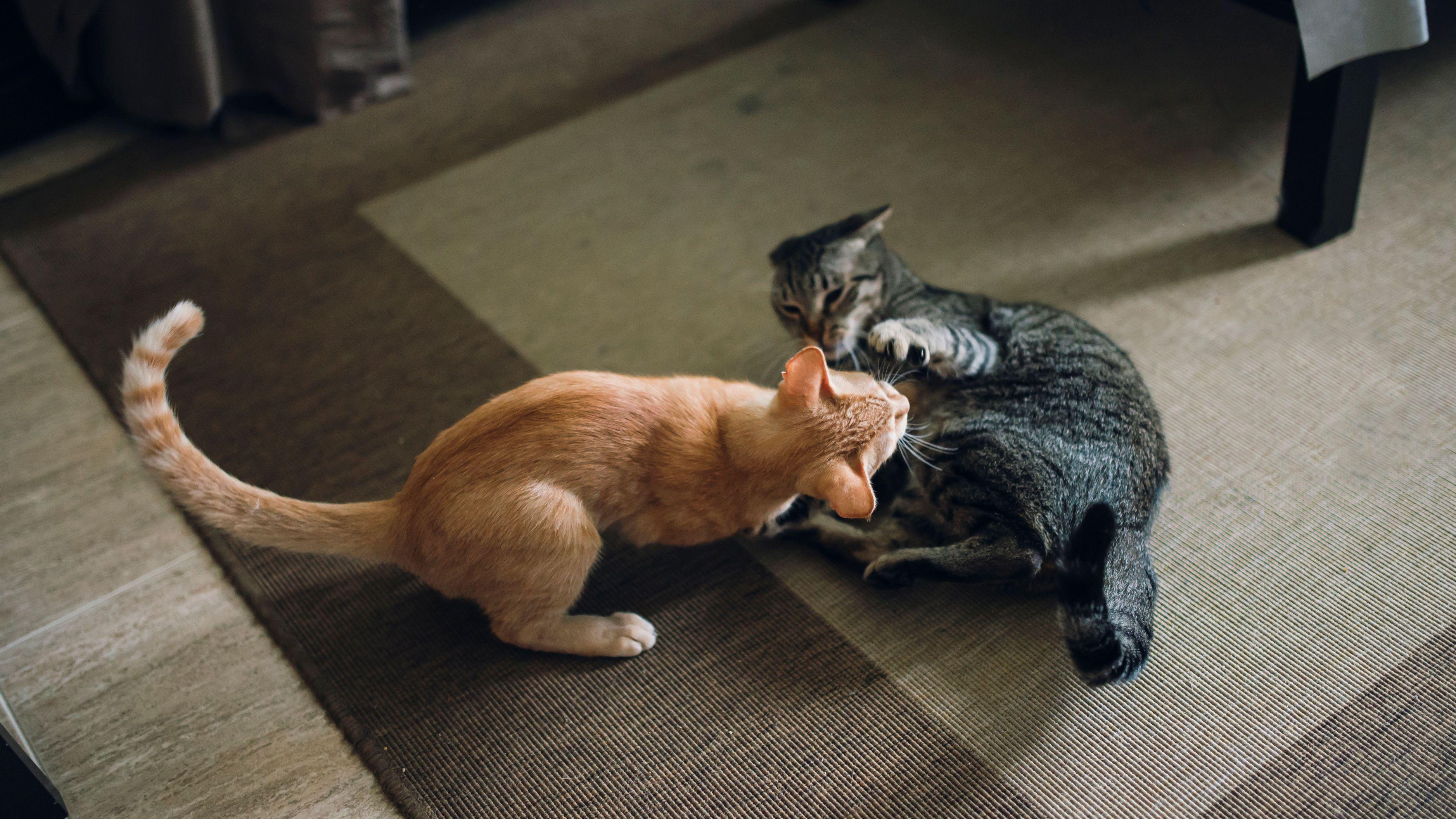 cat spray new baby