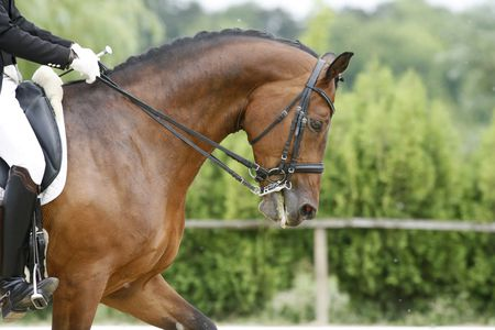 First Bits for Training Young Horses