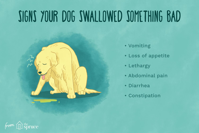 signos de que tu perro se tragó algo malo ilustración