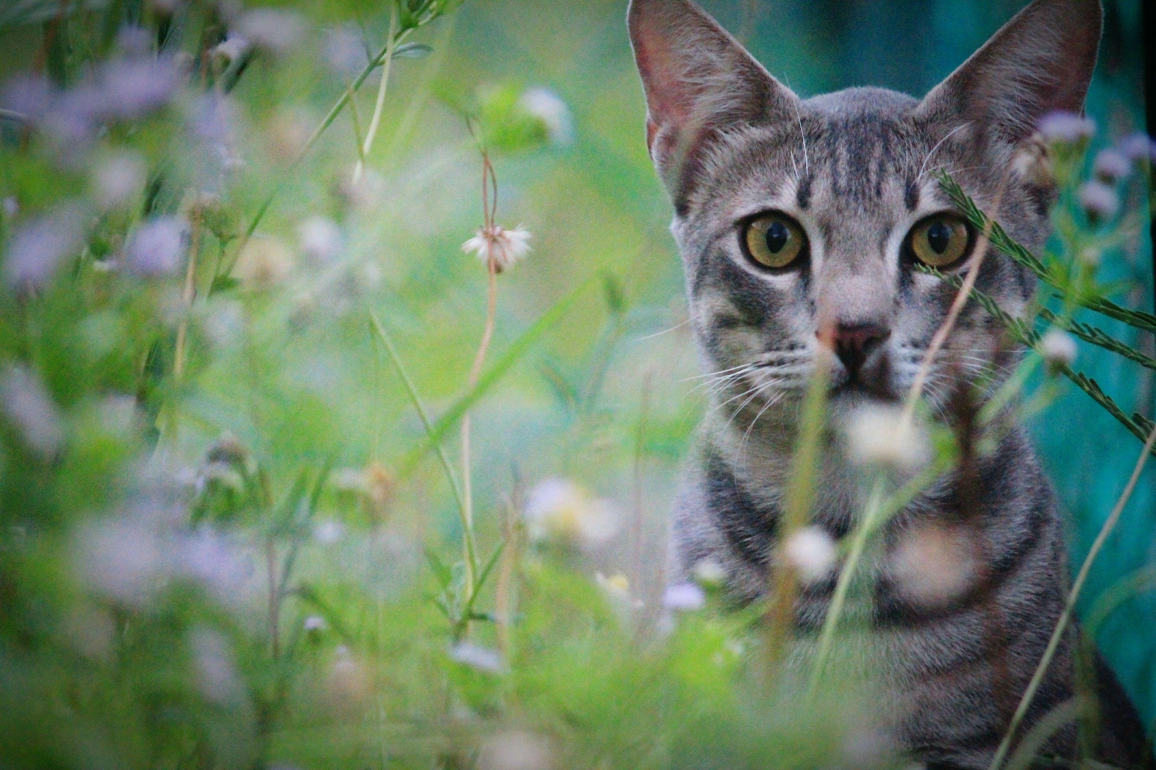 Domestic cat outside among the plants.