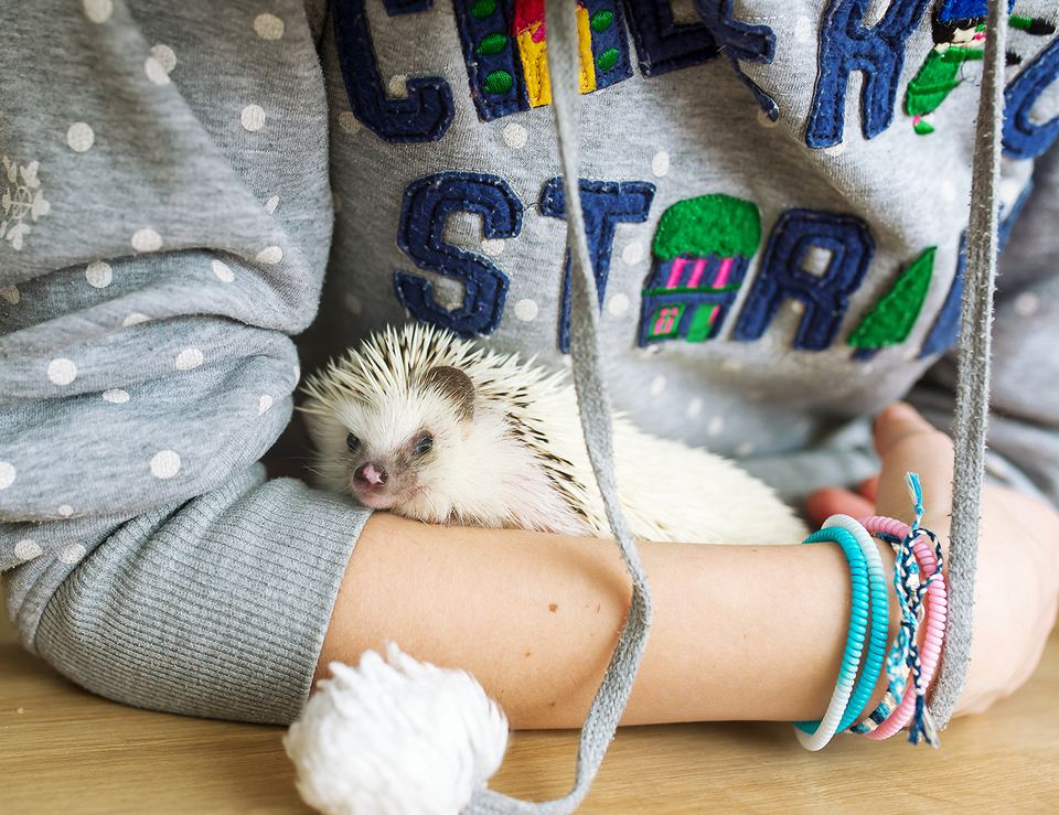 The African Hedgehog Is at the Hostess in Her Embraces