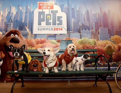 The Secret Life of Pets poster with dogs sitting on a bench