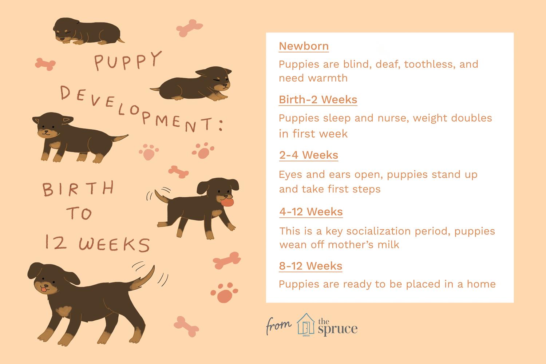 desarrollo de cachorros