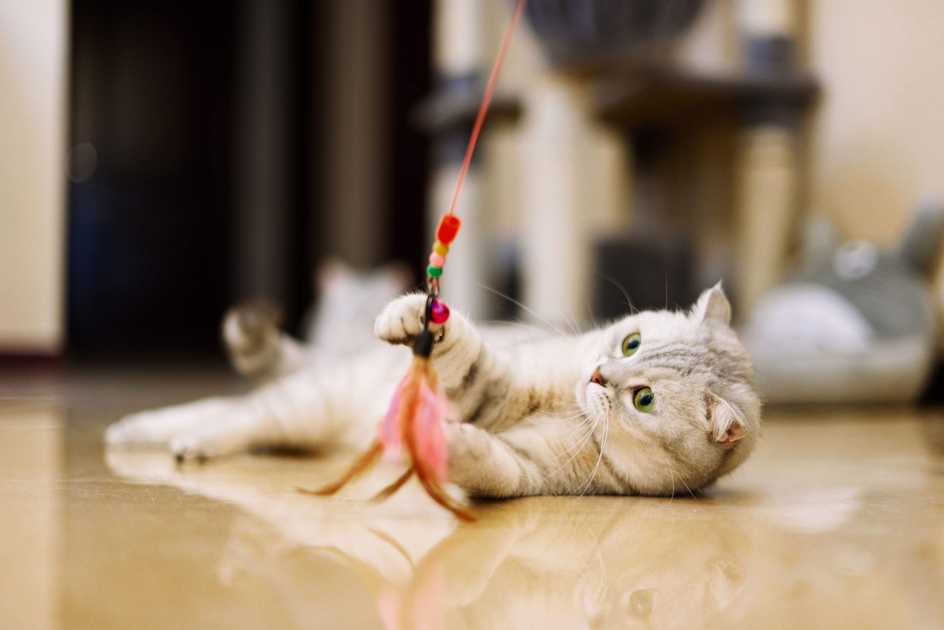 How to Help Your Cat Live Longer