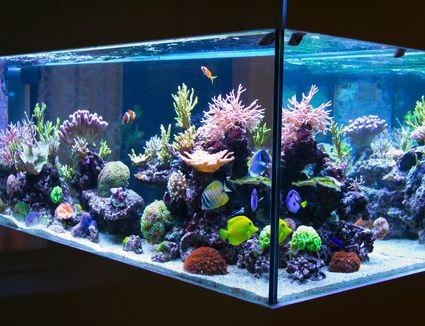 An aquarium lit dynamically by LED lights